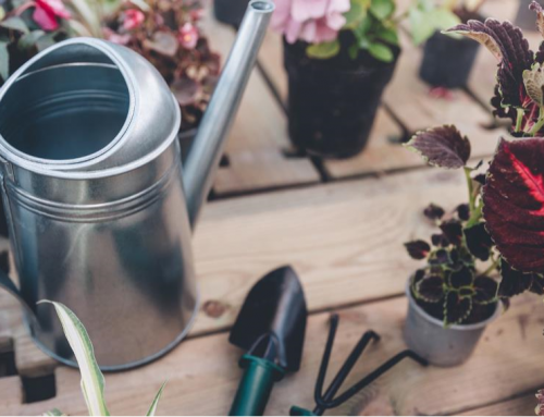 Winter Care Tips for Garden Tools
